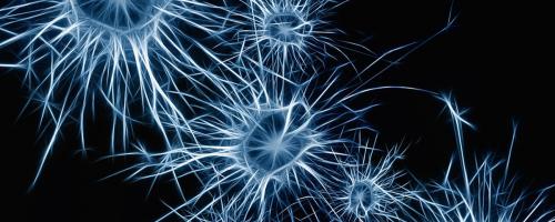 """Cellule staminali per """"ri-generare il cervello"""", uno studio multidisciplinare alla Vanvitelli"""