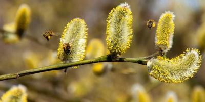 Allergie estive, come difendersi